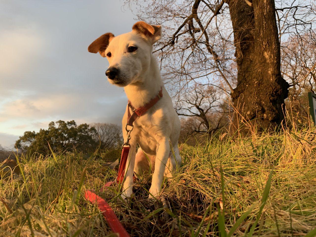 亀井の愛犬タリー