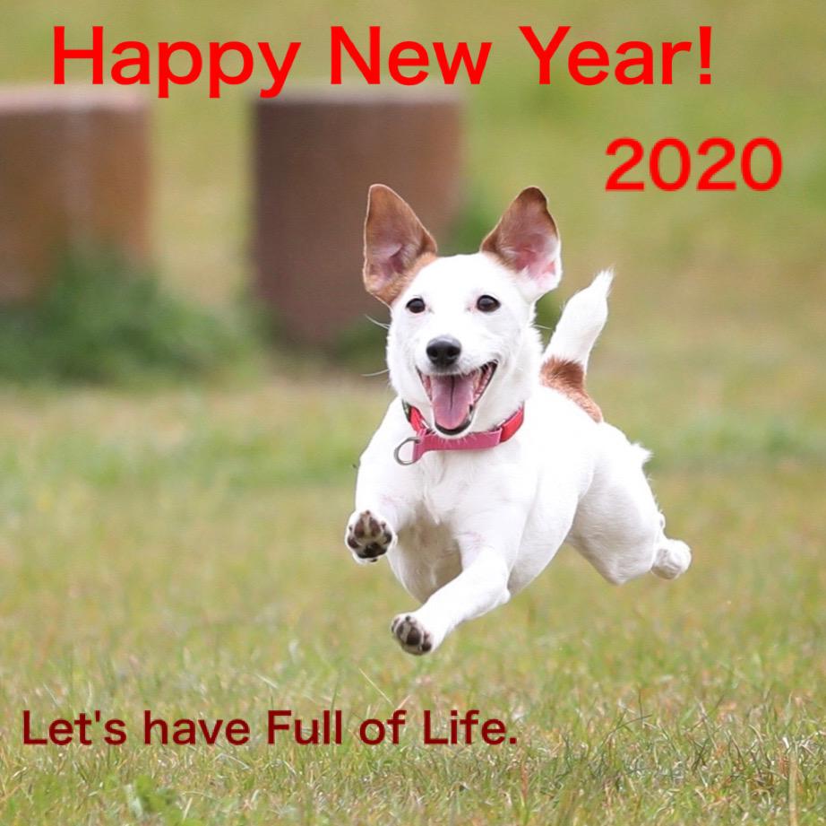 ジャックラッセルテリアのタリーさんから新年の挨拶