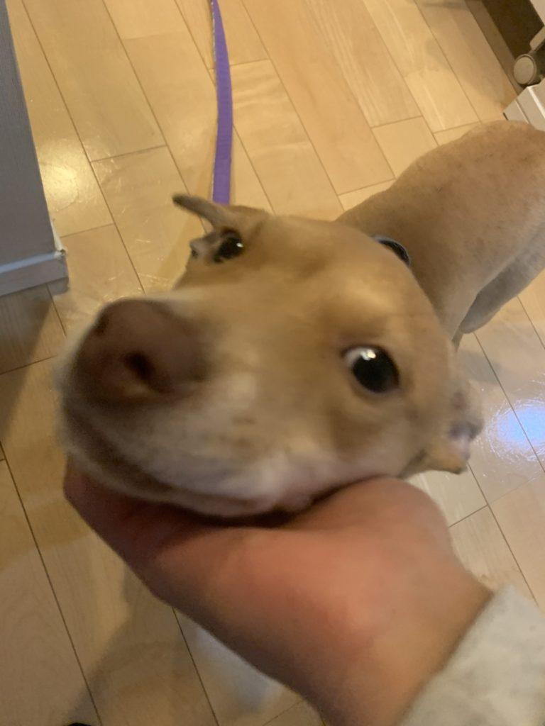 ナデナデ保護犬ちゃん