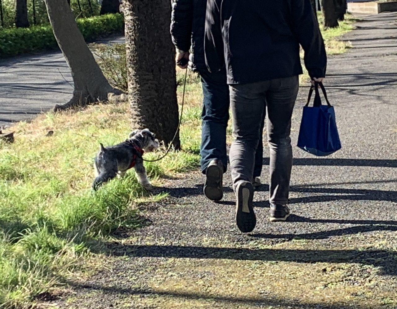 お散歩トレーニングの様子