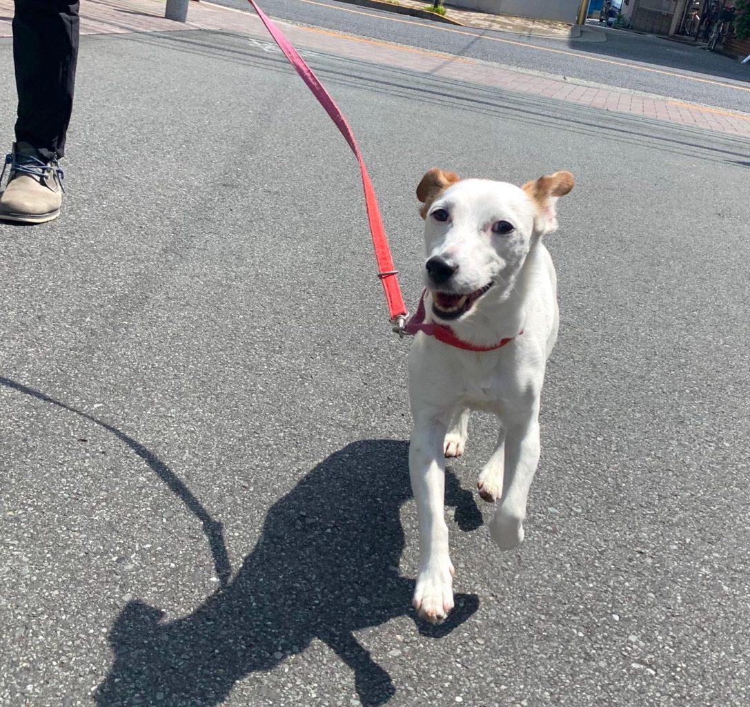 楽しく愛犬とお散歩
