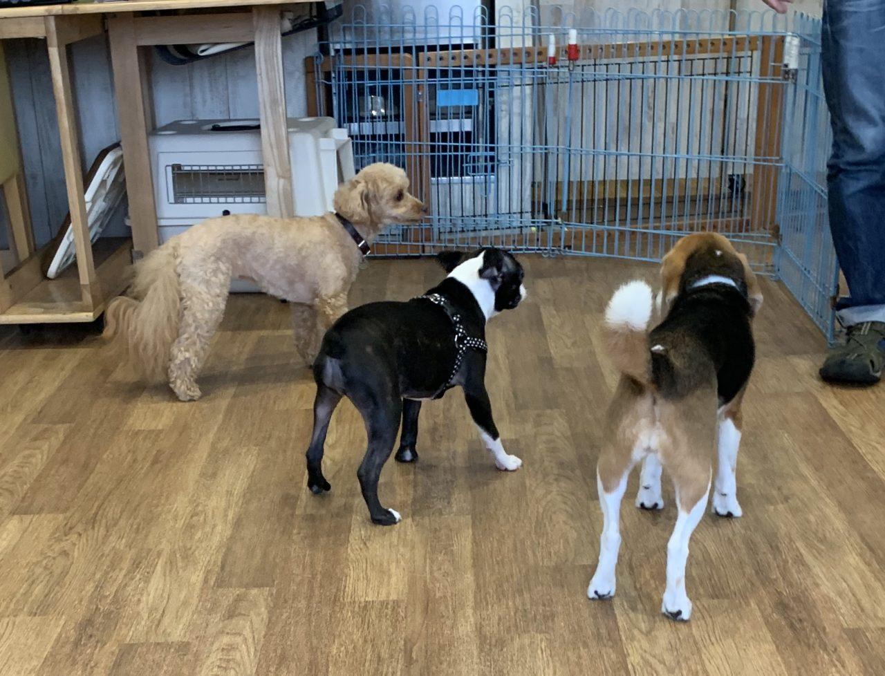 他の犬たちと一緒にいる子犬
